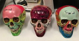 skulls-painted